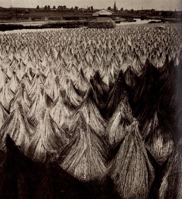 François Kollar, le lin dans le Nord, 1932, 29.3x23.2cm, Pompidou